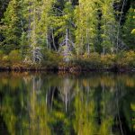 Reflections of Fall in Muskoka: the colours of autumn are mirrored on the water.