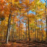 Autumn Woods: the colours of fall in the forest.